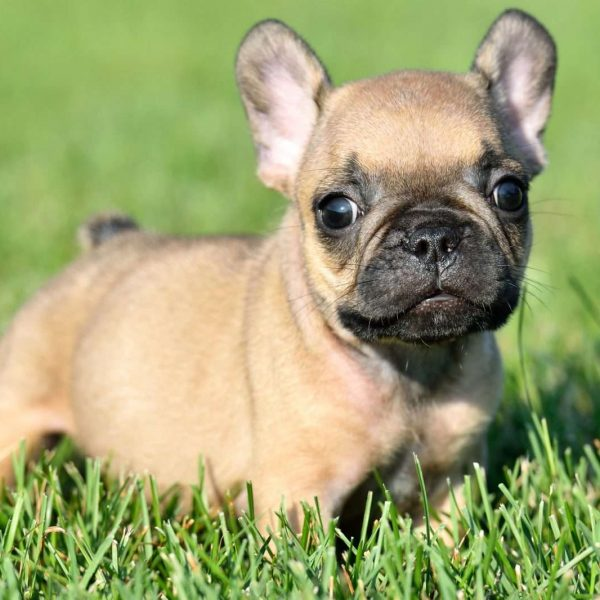 Discussion on this topic: How to Choose a Hypoallergenic Dog, how-to-choose-a-hypoallergenic-dog/