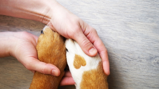 How to Care for Your Puppy's Paws