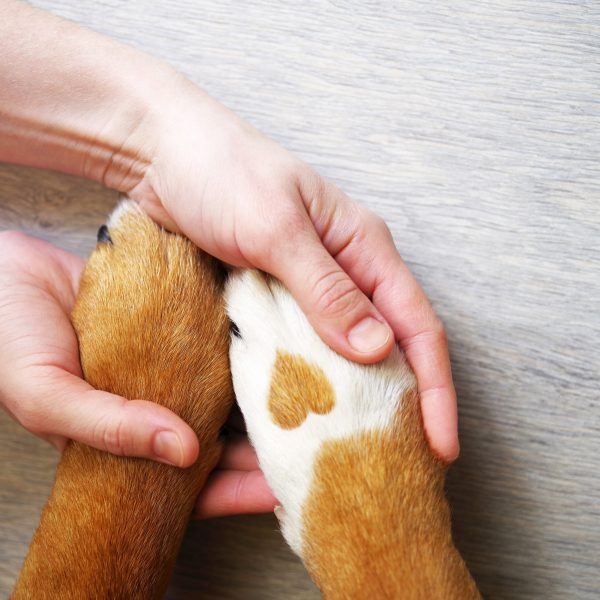 basic needs of a puppy - puppy paws placed in human hands