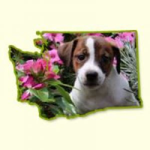 Puppies for Sale in Washington