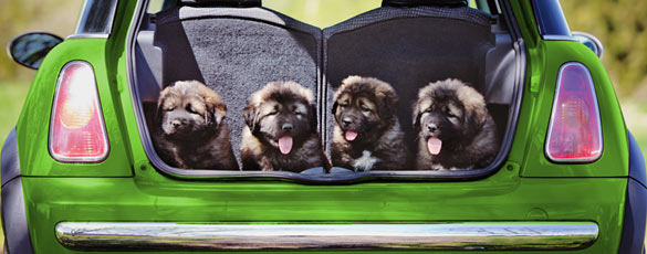 Shipping with Greenfield Puppies