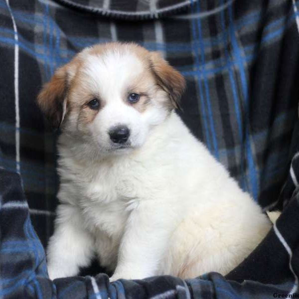 View Explore All Dog Breeds Greenfield Puppies