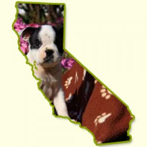 Puppies for Sale in CA