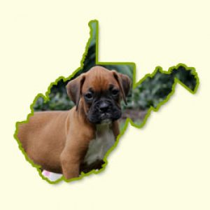 Puppies for Sale in WV