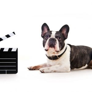 Dog watching movie