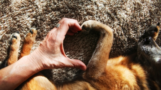 National Pet Memorial Day: 3 Ways to Help