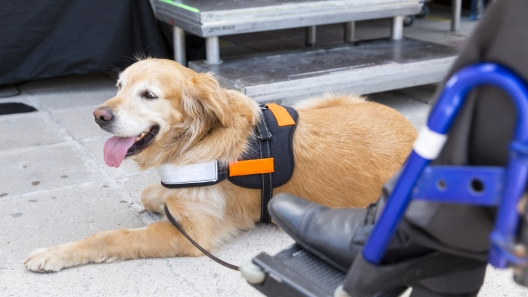 All About International Assistance Dog Week