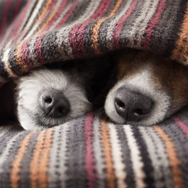 common dog names - two dogs under a blanket