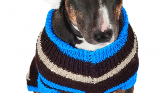 4 Tips to Get Your Pup Ready for Winter