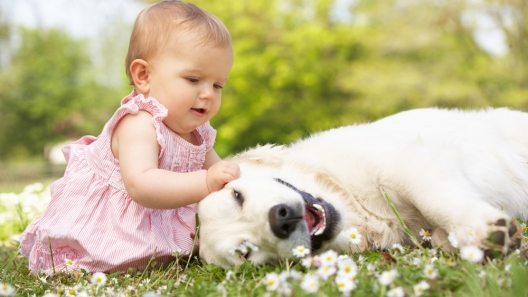 How to Get Your Dog Baby Ready
