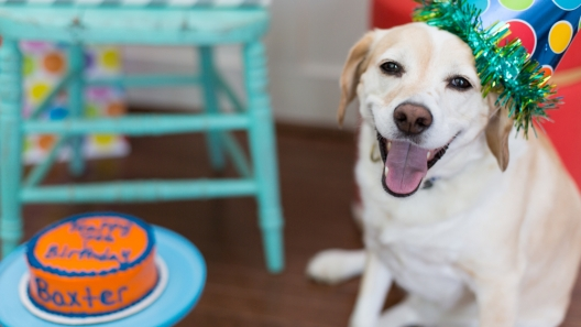 Dog Birthday Parties – How to Celebrate Without Being Obnoxious