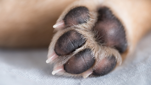 DIY Paw Balm: For Rough and Cracked Paw Pads