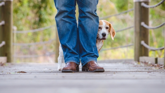 How to Help Your Dog Become Less Anxious