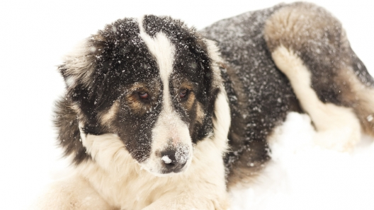 Games to Keep Your Dog Occupied in Winter