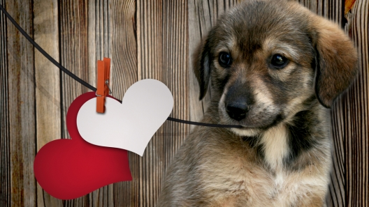 Valentine's Day Gifts for Your Doggies