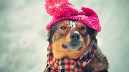 Things to Help You Winterize Your Puppy