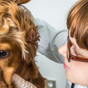 Sick dog - how to care for your sick pup