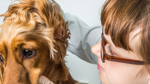How to Care for Your Sick Pup