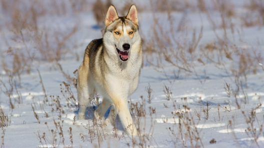How to Keep Your Pup Safe and Happy on Snowy Days