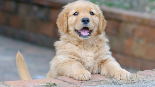 3 Questions to Ask Yourself Before You Get a Puppy