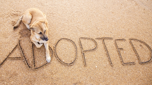 For the Love of Dog: Awesome Dog Rescue Organizations