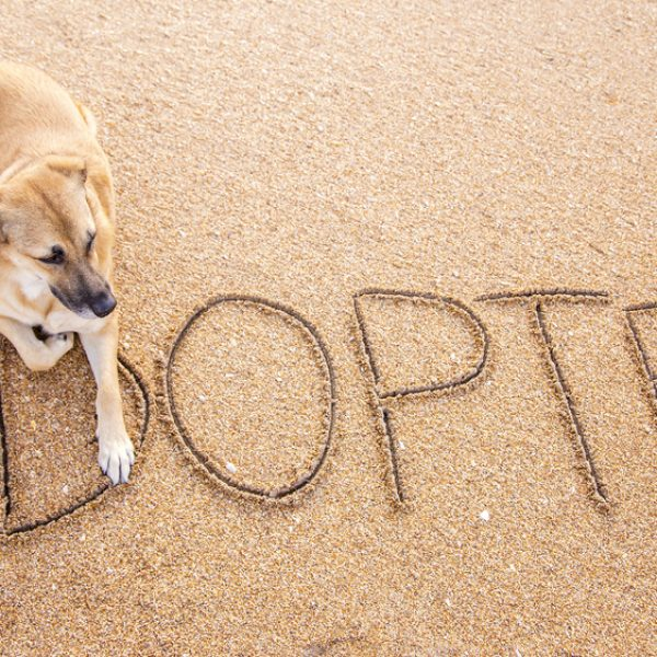 adopted - dog rescue organizations