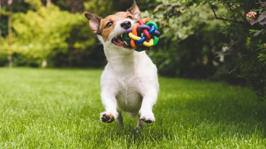 Fun, Challenging Games and Toys for Your Dog