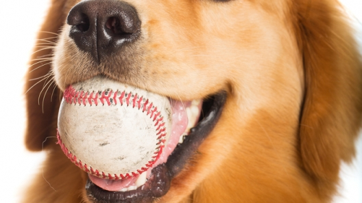 Enjoy Bark In The Park at Clipper Magazine Stadium on April 30!