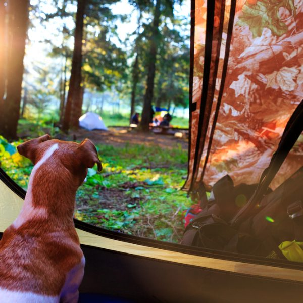 Happy camper; what its like to camp with your dog