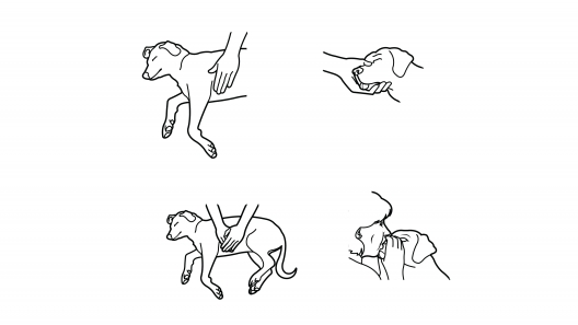 How to Give Your Dog CPR