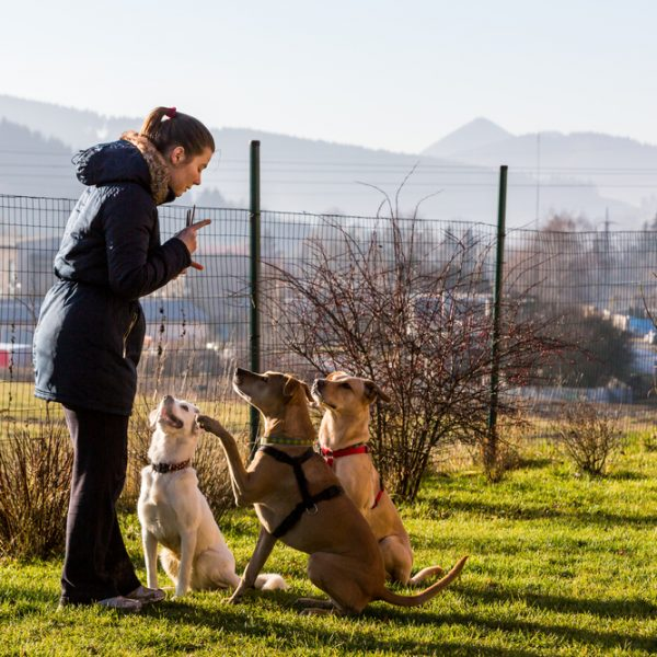 How to help puppies; dogs being trained