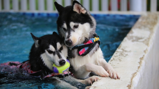 7 Safety Tips for Swimming with Your Dog