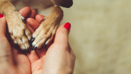 The Best Animal Charities Helping Animals Every Day