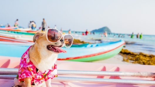 Top Dog-Friendly Beaches of the Mid-Atlantic