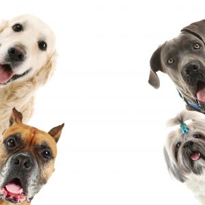 heimlich maneuver for dogs - 4 dogs