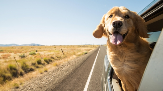 5 Tips for a Fun, Safe Road Trip with Your Dog