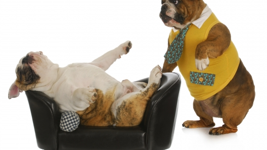6 Pieces of Advice from Dogs