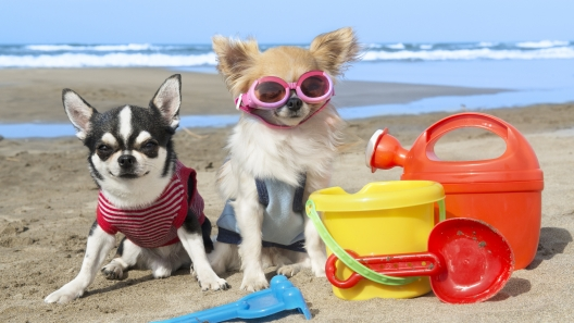Must-Have Beach Gear for Your Dog