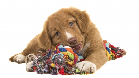 4 Fun Pinterest Crafts for Dogs