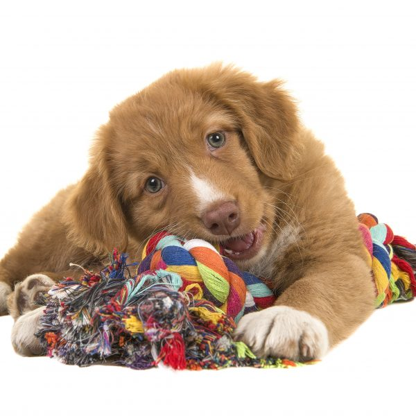 pinterest crafts for dogs - puppy with rope toy