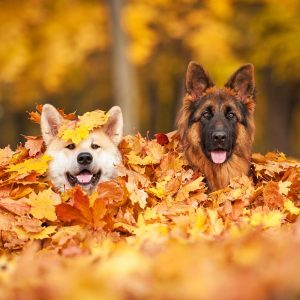 second dog - two dogs in a pile of leaves