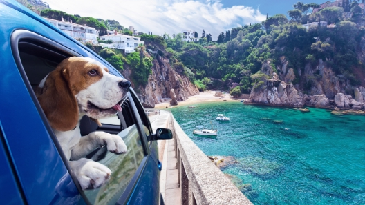 Tips for Traveling With Your Dog This Summer