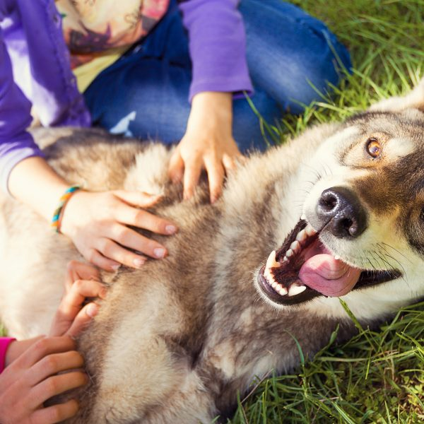 Dog breeds for large families - dog on ground, two kids petting