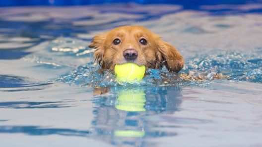 Canine Hydrotherapy Benefits