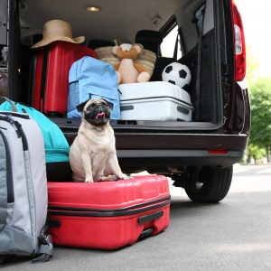 dog friendly destinations - pug sitting on luggage by open trunk of car