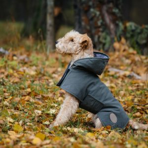 dog weather products - terrier in coat