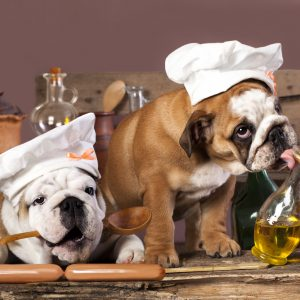 safe herbs and spices for dogs - english bulldog puppies in chef hats