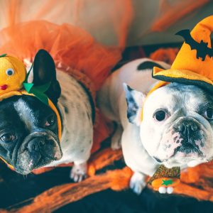 dog-friendly halloween treats - two dogs in halloween costumes
