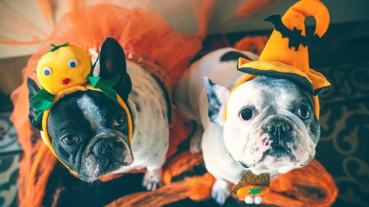 4 Dog-Friendly Halloween Treats