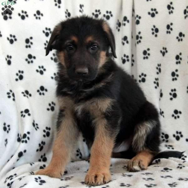 Darren Sproles, German Shepherd Puppy